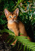 CAT 03 AL0054 01