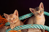 CAT 03 AL0055 01