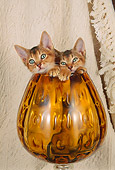 CAT 03 AL0056 01