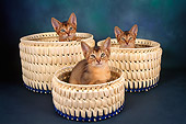 CAT 03 AL0058 01