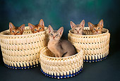 CAT 03 AL0059 01