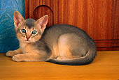 CAT 03 AL0061 01