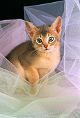 CAT 03 AL0062 01