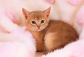 CAT 03 AL0064 01