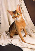 CAT 03 AL0069 01