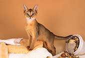 CAT 03 AL0070 01
