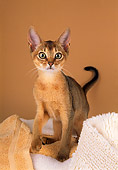 CAT 03 AL0071 01