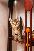 CAT 03 AL0077 01