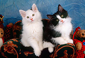 CAT 03 AL0086 01