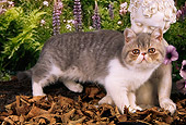 CAT 03 AL0088 01