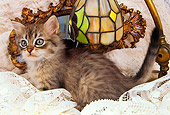 CAT 03 AL0089 01