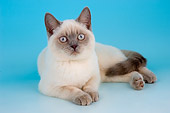 CAT 03 AL0101 01