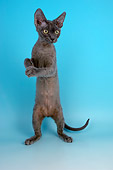 CAT 03 AL0103 01