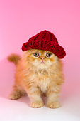 CAT 03 AL0109 01