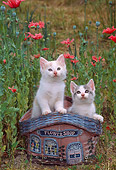 CAT 03 CE0001 01