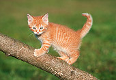 CAT 03 GR0005 01