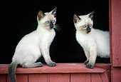 CAT 03 GR0018 01