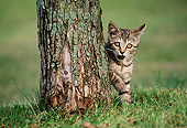 CAT 03 GR0038 01