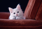 CAT 03 GR0045 01