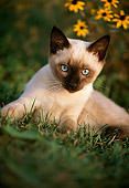 CAT 03 GR0052 01