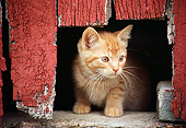 CAT 03 GR0067 01