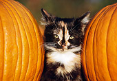 CAT 03 GR0090 01
