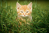 CAT 03 GR0119 01