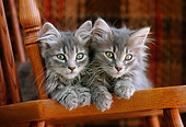 CAT 03 GR0133 01