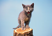 CAT 03 GR0172 01