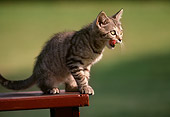 CAT 03 GR0242 01