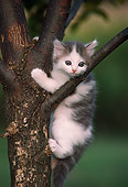 CAT 03 GR0301 01
