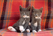 CAT 03 GR0328 01