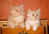 CAT 03 GR0339 01