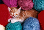 CAT 03 GR0342 01