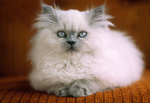 CAT 03 GR0353 14