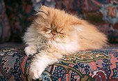 CAT 03 GR0376 01