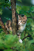 CAT 03 GR0485 03