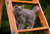 CAT 03 GR0580 01