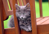 CAT 03 GR0585 01