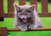 CAT 03 GR0589 02