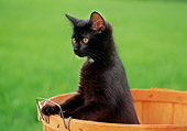 CAT 03 GR0594 02