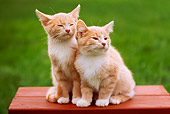 CAT 03 GR0649 01