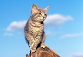 CAT 03 GR0673 03