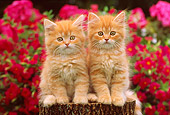 CAT 03 GR0734 01