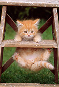 CAT 03 GR0755 01