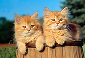 CAT 03 GR0762 01