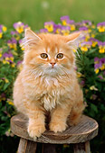 CAT 03 GR0766 01