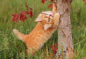 CAT 03 GR0776 01