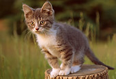 CAT 03 GR0802 01