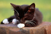 CAT 03 GR0809 01